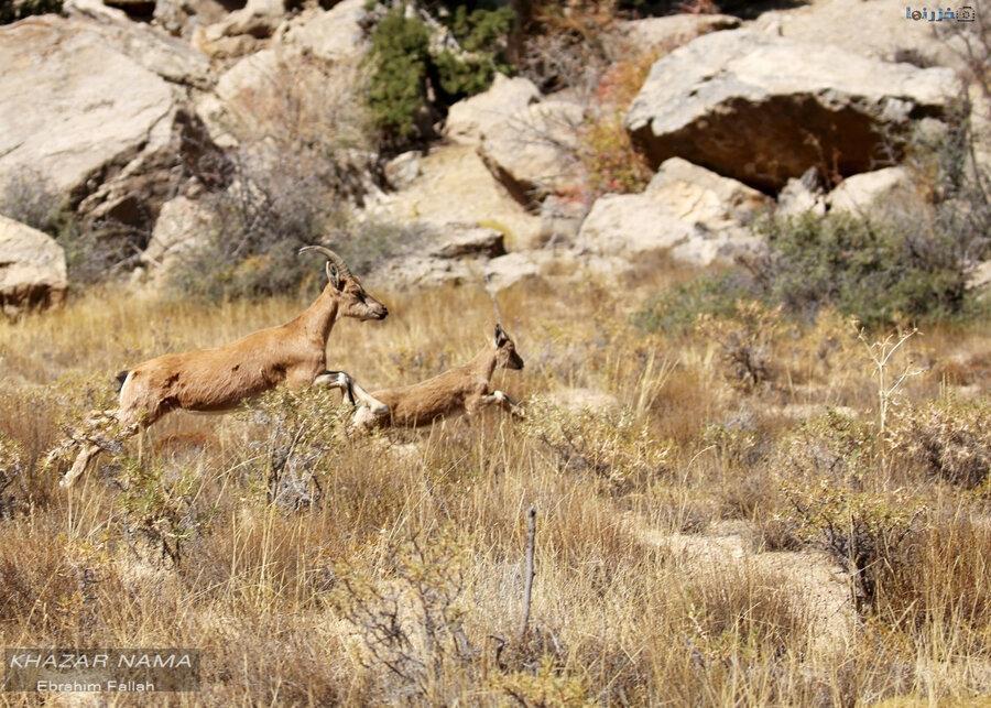 برای انتقال حیات وحش در مناطق سیل زده با آتش نشانی تماس بگیرید