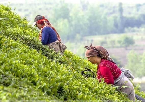 جاذبه های گردشگری کِلاچای؛ شهر چای ایران