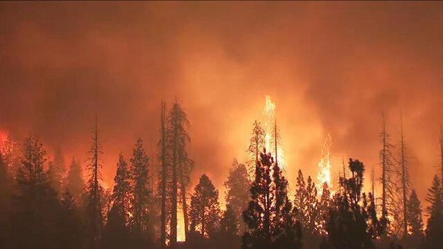افزایش فوتیهای ناشی از آتش سوزیهای جنگلی در کالیفرنیا