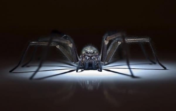 28 روش عالی برای فراری دادن سوسک حمام، عنکبوت و هزارپا
