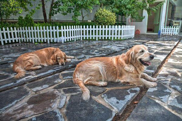 عجیب ترین خدمات برای حیوانات خانگی در ایران